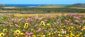 West Coast - Fantastic Flowers, Fishing and Fun in the Sun - South Africa
