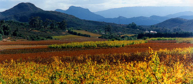 Areas to visit in the Western Cape of South Africa